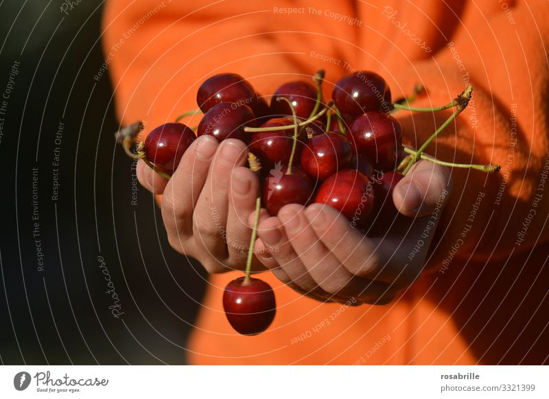 fresh fruit e.g. cherries | vital hands Child Offer reap Fresh Delicious Juicy cute Red Summer Summery Orange fruits Fruit Food Joie de vivre (Vitality) Joy