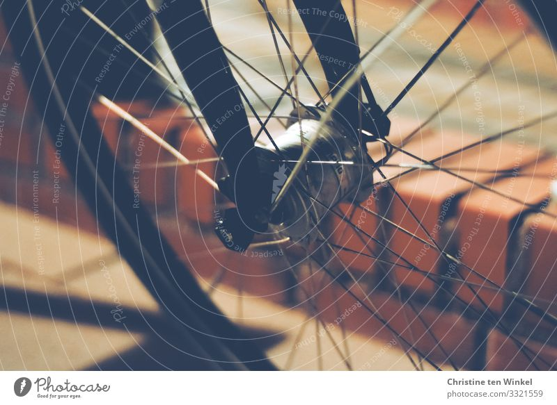 back wheel of a bicycle Means of transport Bicycle Wall (barrier) little wall Stone Authentic Glittering Uniqueness Near Athletic Brown Red Black Attentive