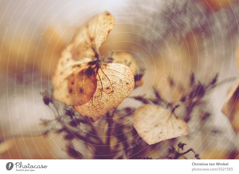 Nature Plant Beautiful Warmth Blossom Natural Sadness Emotions Exceptional Death Brown Moody Gold Glittering Esthetic Bushes