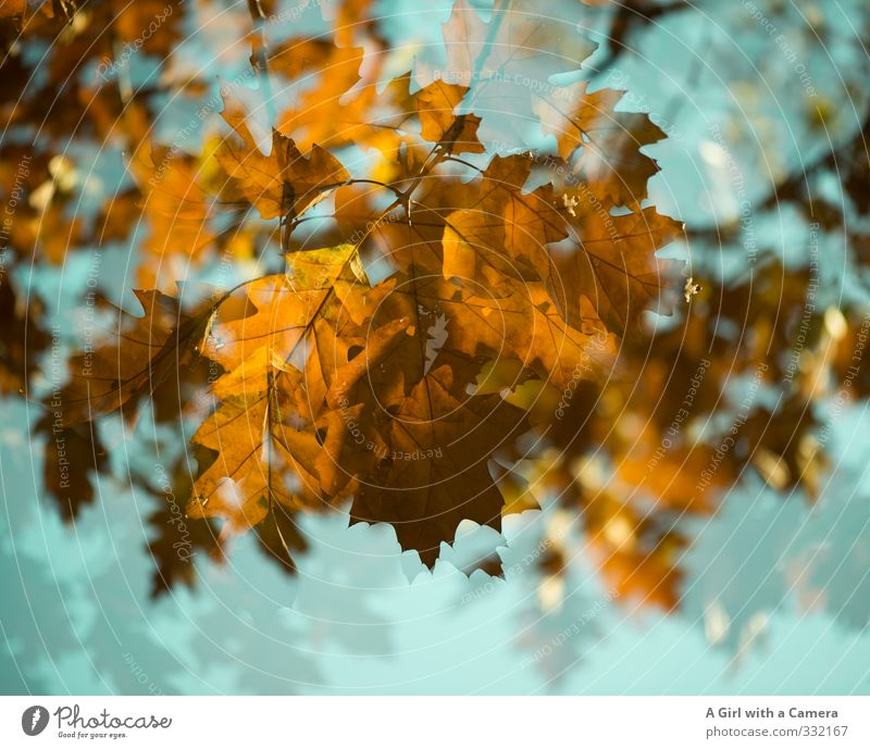 Spring and autumn Autumn Tree Garden Park Forest Gold Turquoise Autumn leaves Double exposure Maple tree Colour photo Multicoloured Exterior shot Experimental