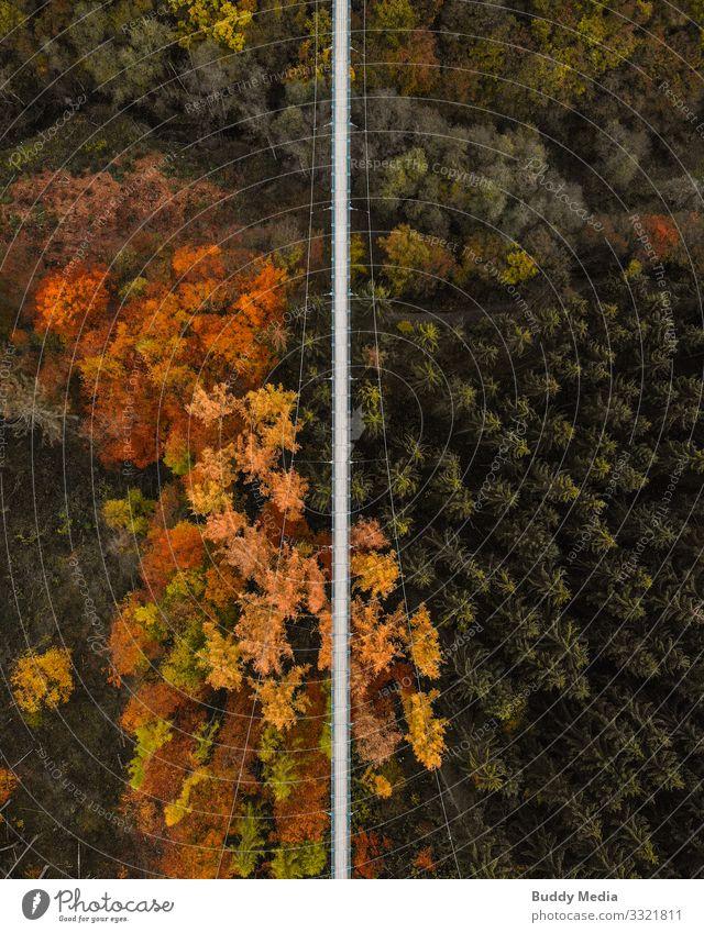 UAV shot of the suspension rope bridge Geierlay Tourism Adventure Sightseeing Expedition Camping Hiking Nature Landscape Autumn Tree Forest Canyon Hunsrück