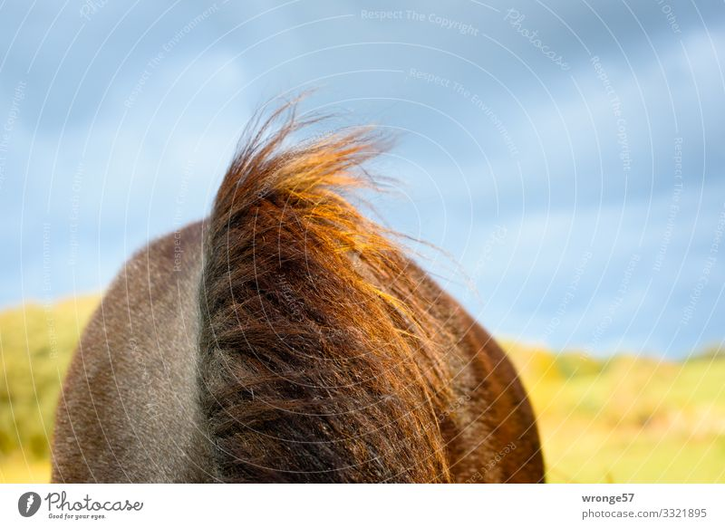 storm hairstyle Summer Farm animal Horse 1 Animal Blue Brown Yellow Green Mane Bay (horse) Pasture Sky Clouds in the sky Wind Horseback Windblown hair