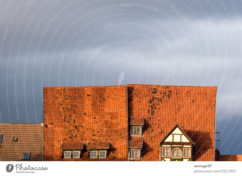 Quedlinburg roofs House (Residential Structure) Half-timbered house Window Roof Old Beautiful Town Gray Red Living or residing Tiled roof Brick red Old town