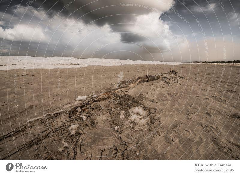 Nature Landscape Clouds Beach Winter Environment Coast Sand Wind Threat Baltic Sea Storm Gale Sandy beach Bad weather Flotsam and jetsam