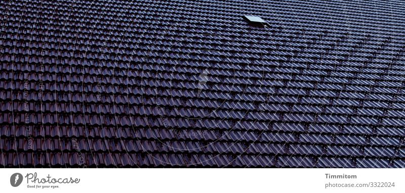 roof House (Residential Structure) Roof Line Esthetic Cold Blue Black Emotions Protection Roofing tile Skylight Black Forest house Colour photo Exterior shot