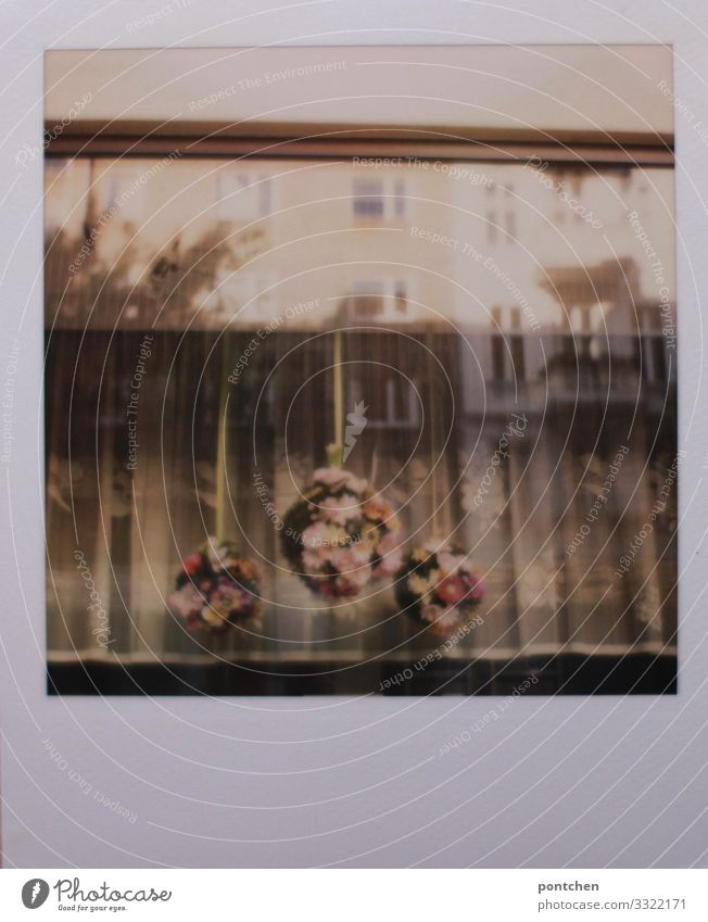 Polaroid view from outside through the window. Old fashioned curtains and flower arrangements House (Residential Structure) Window Reflection Decoration Wreath