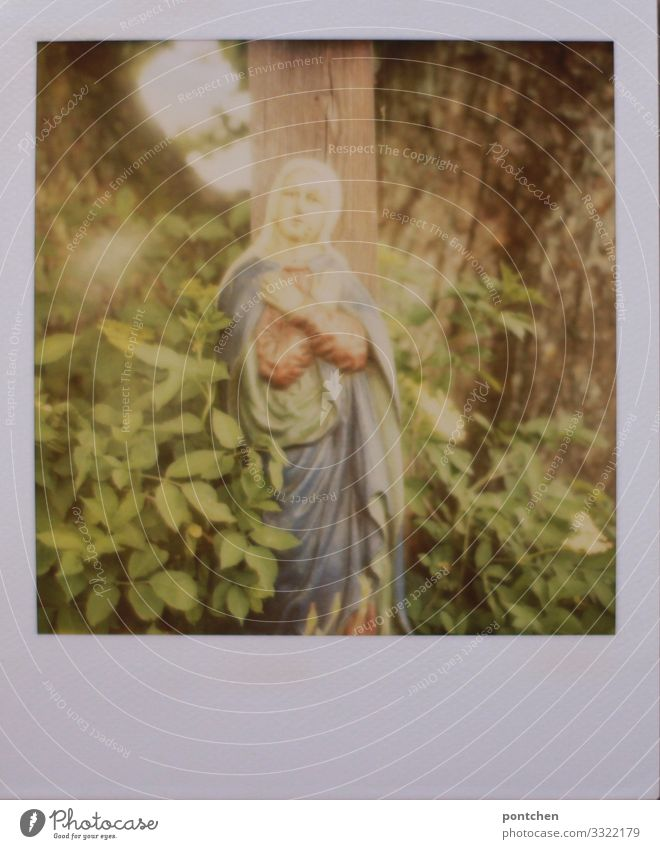 Polaroid shows a statue of the Virgin Mary in front of a tree and green leaves. Religion Art Decoration Collector's item Belief Religion and faith Holy