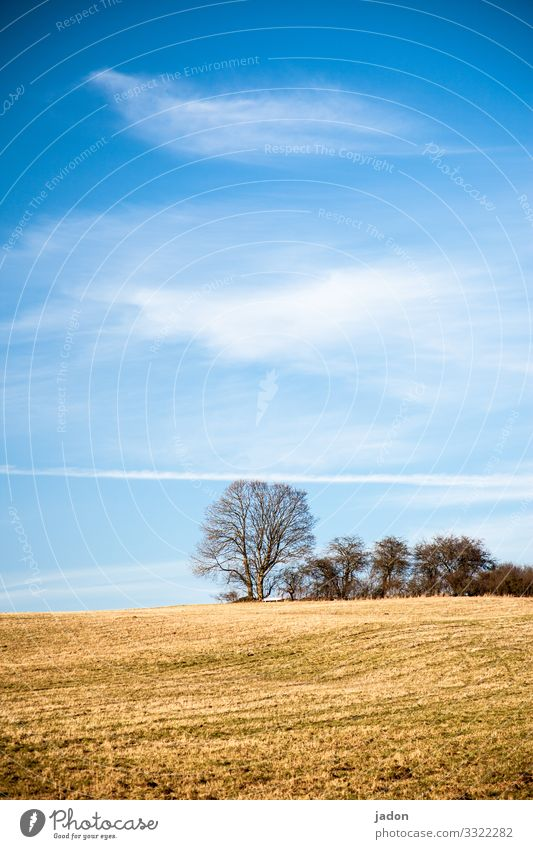 landscape with field and group of trees. Field Landscape Tree Grove of trees Sky Nature Meadow Green Clouds Blue Exterior shot Grass Colour photo Copy Space top