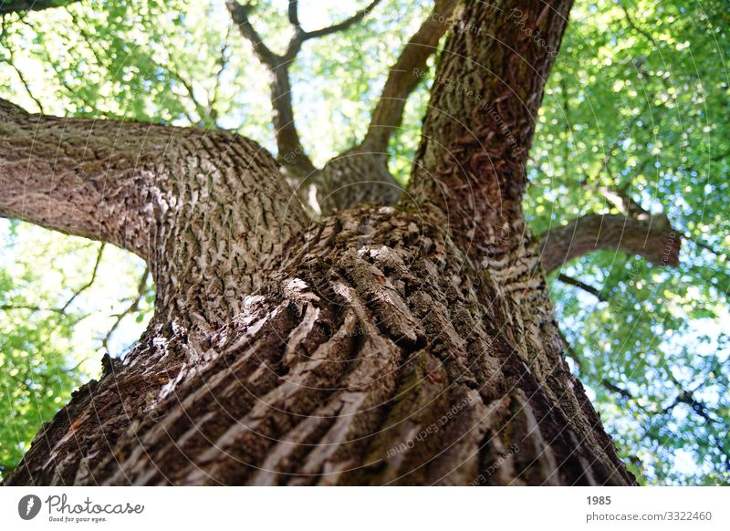 trunk Nature Plant Beautiful weather Tree Foliage plant Agricultural crop Wood Tree bark Tree trunk Looking Carrying Growth Old Near Sustainability Natural
