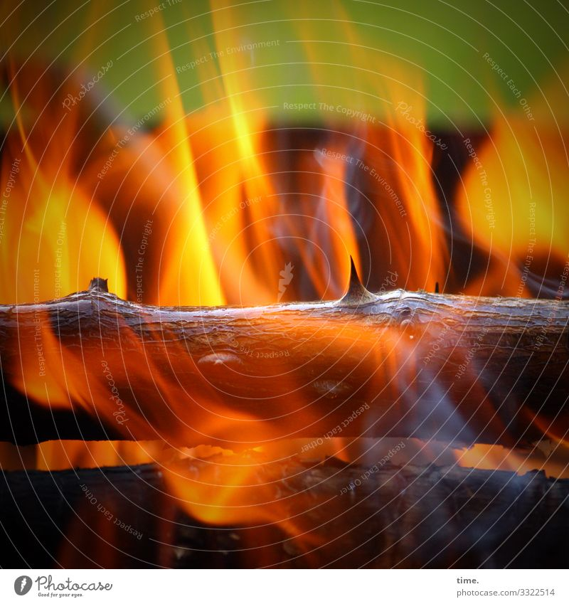 Easter fire - today only in the own four walls! | corona thoughts Fire Burn Flame Hot Branch rose branch Thorn Wood
