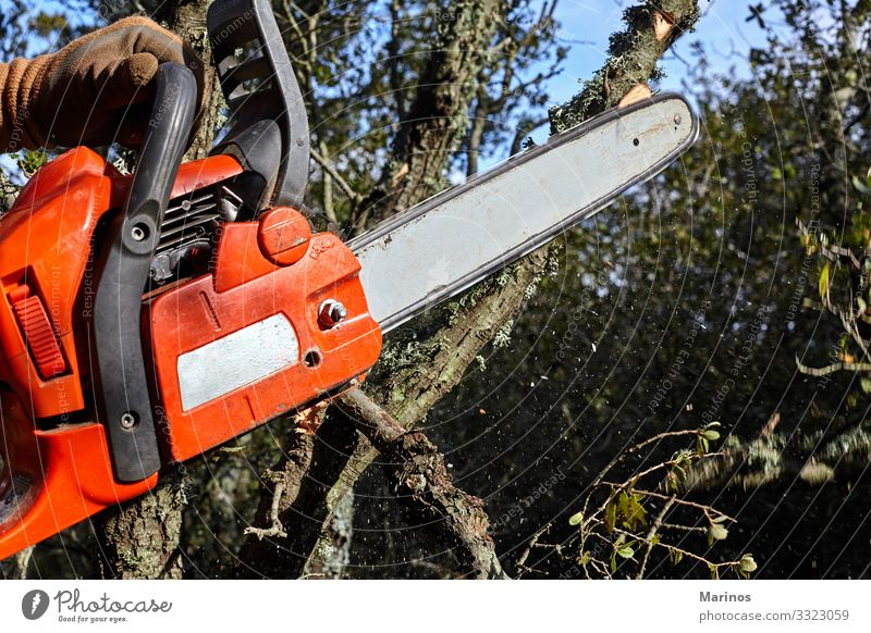 Man cutting trees using an electrical chainsaw in the forest. Work and employment Industry Tool Saw Technology Adults Hand Nature Tree Forest Workwear Might