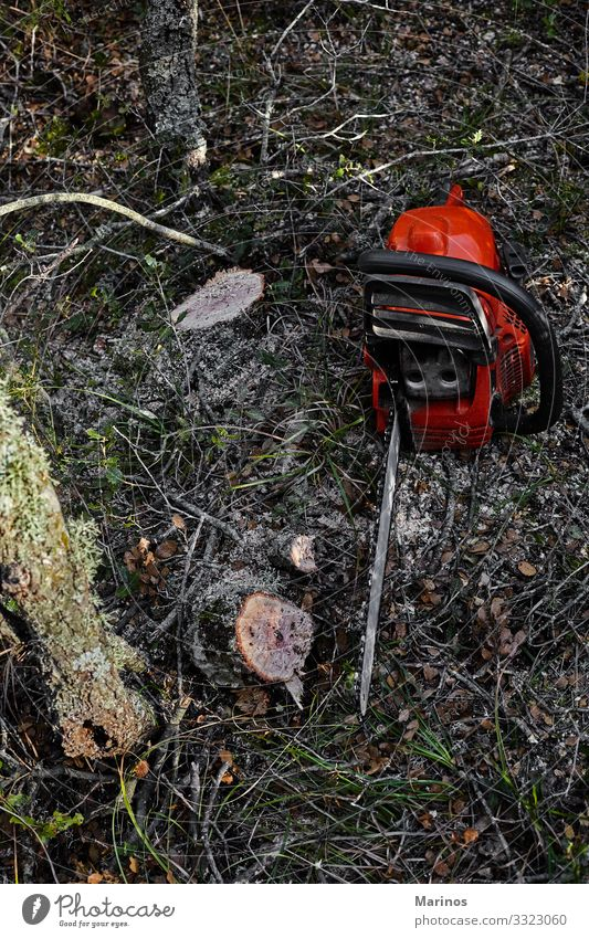 Electrical chainsaw in the forest. Work and employment Industry Tool Saw Technology Man Adults Nature Tree Forest Workwear Wood Might Chainsaw cutting power