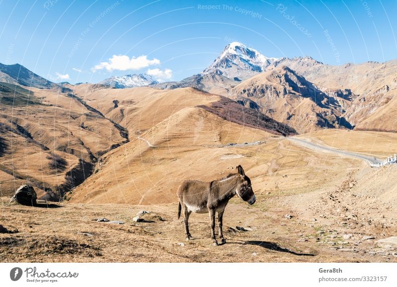 donkey by the cliff with a snowy peak in Georgia Tourism Trip Snow Mountain Nature Landscape Plant Animal Autumn Grass Rock Street Authentic Natural Blue Yellow