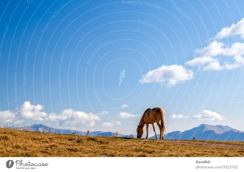 horse on a background of mountains and sky in Georgia Vacation & Travel Tourism Mountain Nature Landscape Plant Animal Sky Clouds Autumn Climate Grass Rock