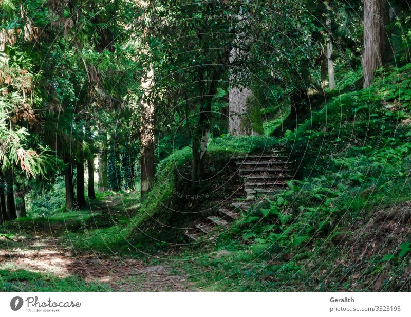 forest with tall trees and stone steps in Georgia Vacation & Travel Tourism Trip Summer Wallpaper Nature Landscape Sky Autumn Climate Warmth Tree Grass Leaf