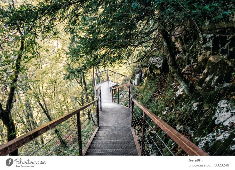 metal stairs in a forest with green trees in a canyon in Georgia Vacation & Travel Tourism Trip Mountain Nature Landscape Plant Autumn Climate Warmth Tree Leaf