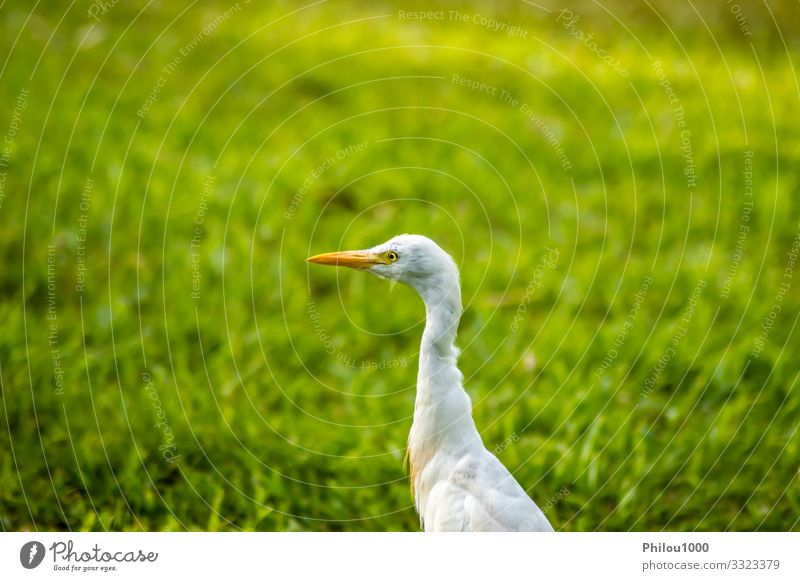 white egret along a forest Nature Summer Green White Animal Leaf Environment Natural Meadow Family & Relations Bird Growth Observe Friendliness Lawn Pasture