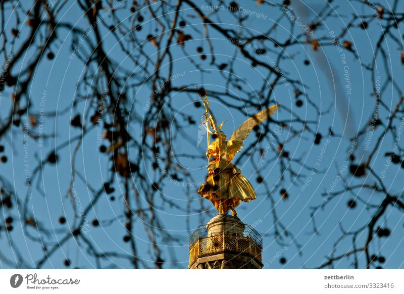 Victory column behind plane tree Tree Berlin leaf gold Monument Germany else Body Figure Gold Goldelse victory statue big star Capital city Sky Heaven Deserted