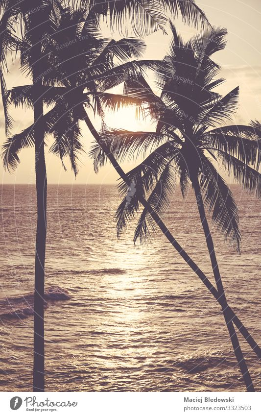 Coconut palm trees silhouettes at sunset. Exotic Relaxation Calm Vacation & Travel Tourism Trip Summer Summer vacation Sun Sunbathing Beach Ocean Island Nature