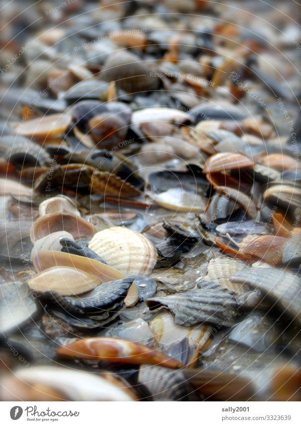colorful seashells... Mussel shell Beach Flotsam and jetsam Heap a lot Ocean variegated Sand Shallow depth of field shattered Broken