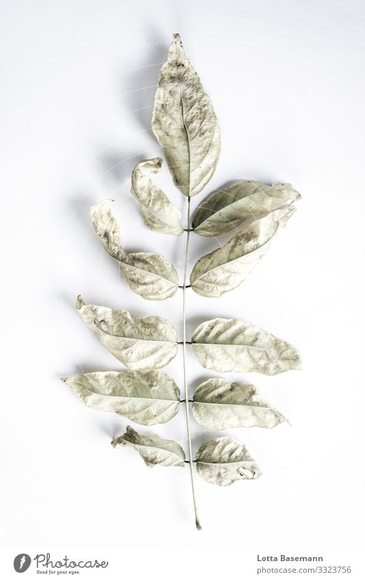 find Environment Nature Plant Leaf Esthetic Beautiful Gray Green Natural Biology Colour photo Subdued colour Close-up Detail Abstract Deserted