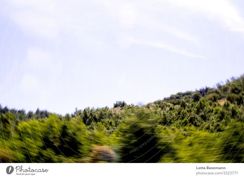 Forest on the move Environment Nature Landscape Plant Animal Sky Sunlight Summer Beautiful weather Tree Leaf Foliage plant Natural Wild Mountain In transit