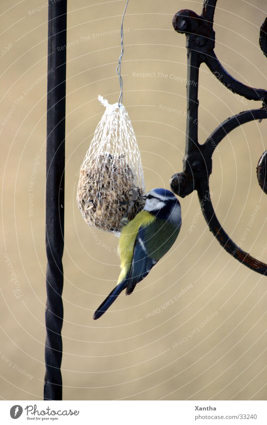 Nature Bird Appetite Fence To feed Grating Feed Tit mouse Birdseed Love of animals