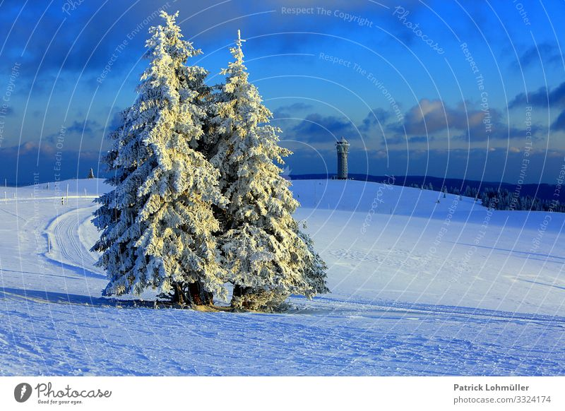 snow trees Vacation & Travel Tourism Trip Winter vacation Mountain Hiking Environment Nature Landscape Sky Climate Climate change Beautiful weather Ice Frost