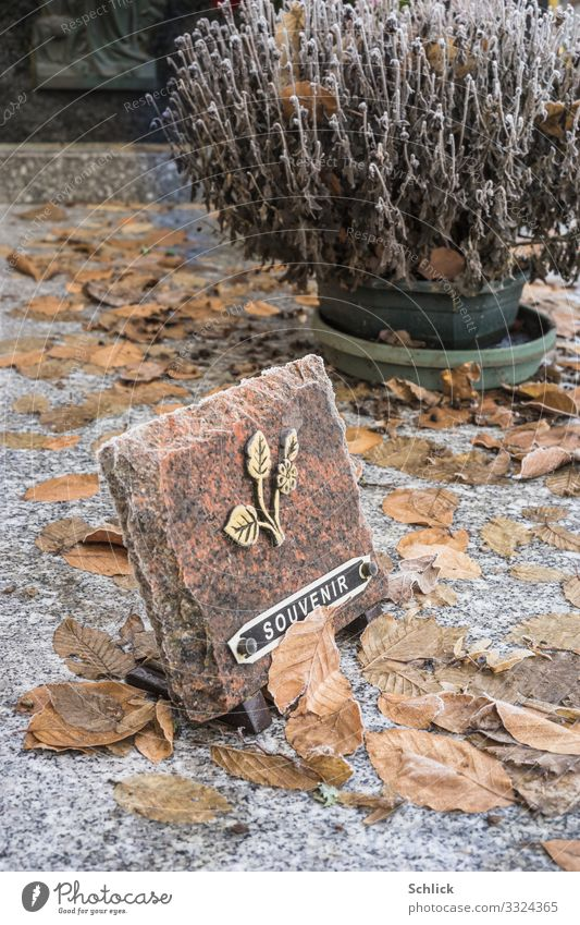 commemoration Grave Sign Characters Brown Gold Black White Commemorative plaque Tombstone Autumn leaves Plant Flower Shriveled Death Grief Forget Winter Shabby
