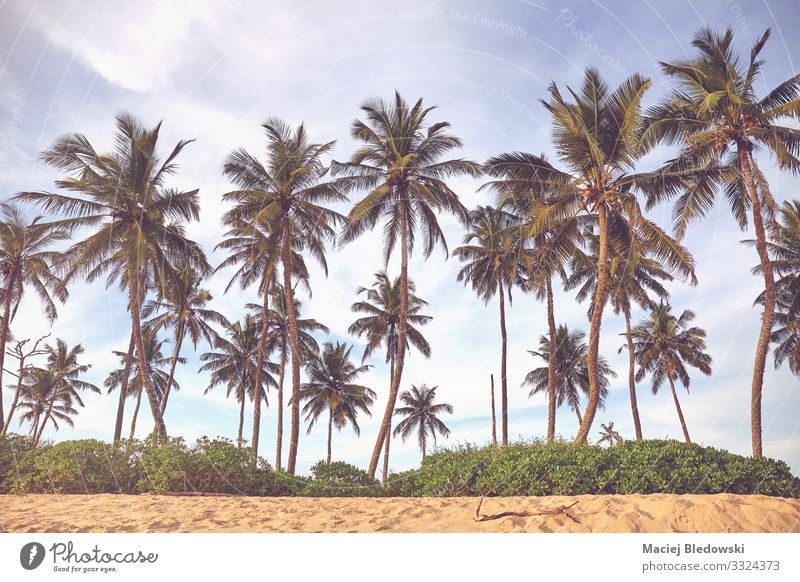Coconut palm trees at a beach. Relaxation Vacation & Travel Tourism Trip Adventure Summer Summer vacation Beach Island Nature Landscape Sand Sky