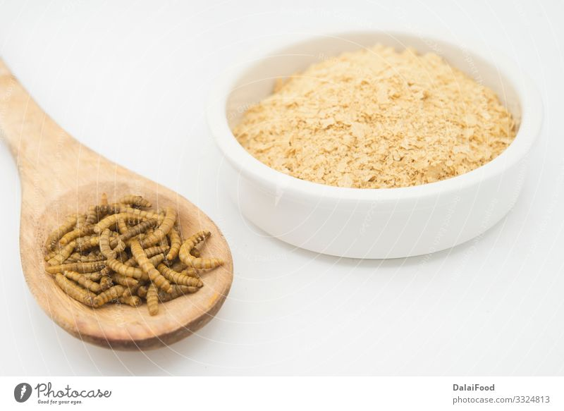 Worm flour in white background Diet Worm meal Edible Flour Frying Insect isolated Larva Protein Colour photo