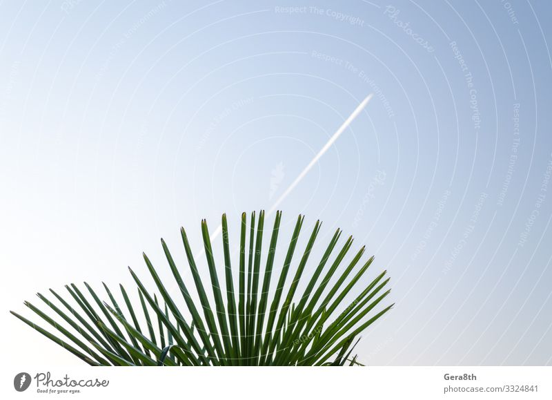 green tropical plant and trail of a take off plane Sky Nature Plant Blue Colour Green White Leaf Natural Bright Line Fresh Clean Airplane takeoff Story Tropical