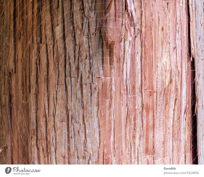natural tree trunk texture pattern close up Nature Wood Natural Clean Red Colour background bark Blank detailed orange textural Consistency Without wood pattern
