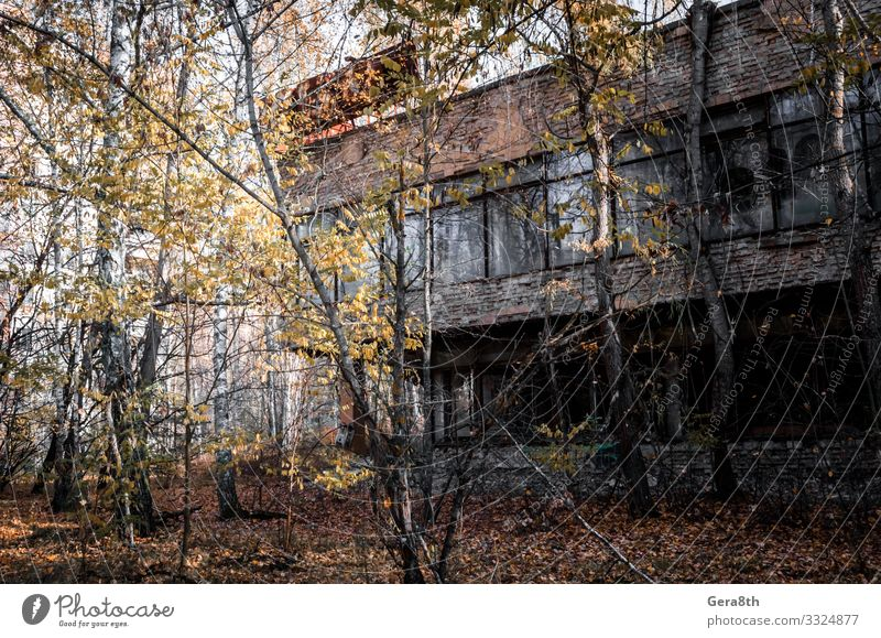 ruins of a brick house in the city of Chernobyl Ukraine Vacation & Travel Tourism Trip House (Residential Structure) Plant Autumn Tree Grass Leaf Ruin Building