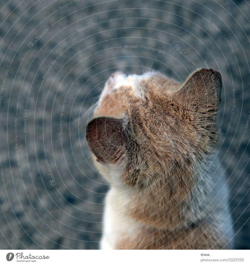 head cinema see look Observe Skeptical Intensive animal portrait Pelt temporising Wait Head Cat cat-haired ears eavesdrop orient vigilantly lurk