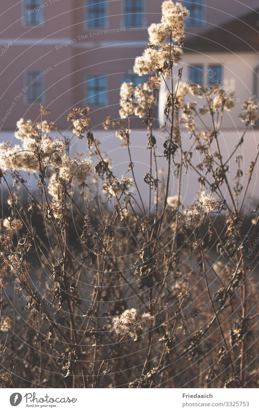 Faded in the city Plant Sunlight Winter Beautiful weather Bushes Small Town Outskirts Facade Blossoming Discover Relaxation Going To enjoy To dry up Happy