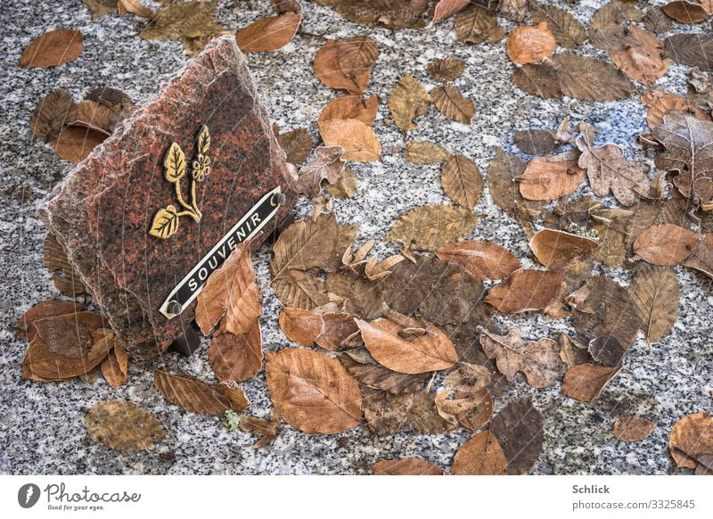 souvenir Monument Stone Sign Characters Brown Gold Gray Black Grief Death Grave Autumn Autumn leaves Remember Hoar frost Winter Cold Text Inscription Souvenir