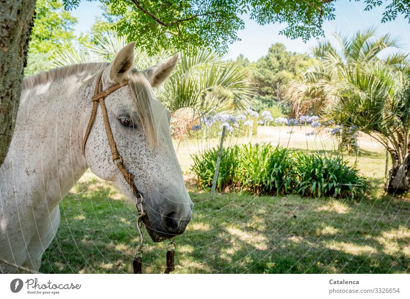 Horse head in the penumbra of the trees Keeping of animals Plant Landscape Nature Animal Farm animal Sky Beautiful weather daylight Day flora Summer Grass