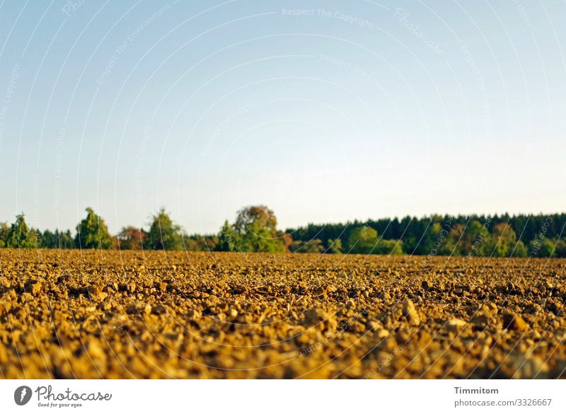 A wide field Field acre Arable land tree Trees on the horizon Forest natural Landscape Environment Agriculture green Brown Blue Sky Deserted