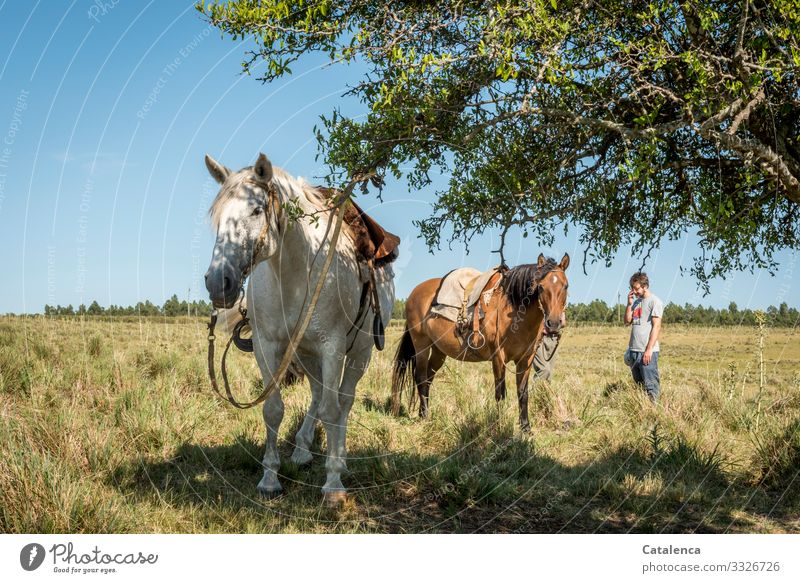 Horses and their riders stand waiting in the high grass daylight Day Beautiful weather Grass Sky Horizon Farm animal Animal Nature Landscape Plant Summer
