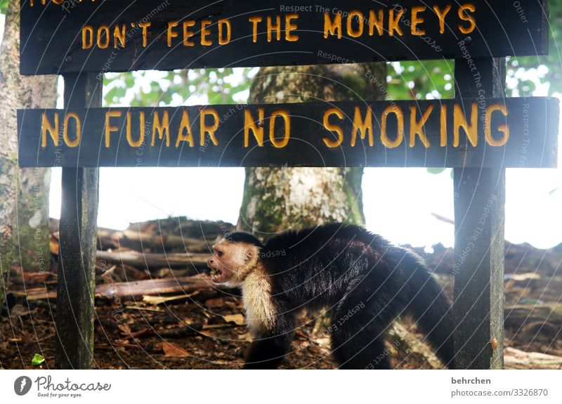 written | request Vacation & Travel Tourism Trip Adventure Far-off places Freedom Virgin forest Wild animal Animal face Pelt Monkeys Capuchins Exceptional
