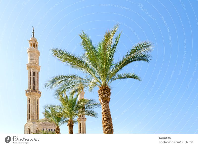 mosque and green palm trees against a clear blue sky in Egypt Vacation & Travel Tourism Summer Plant Sky Tree Building Architecture Tourist Attraction Monument