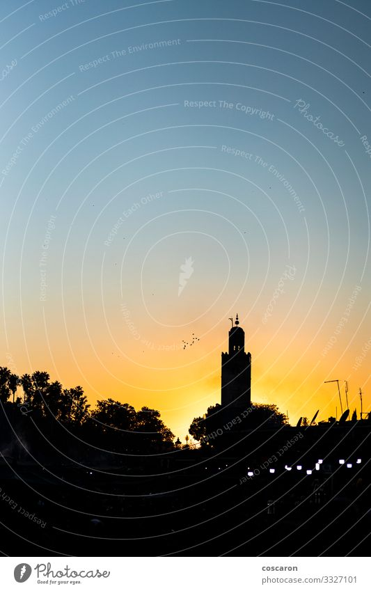 Orange sunset in the tower of the Marrakech. Morocco Vacation & Travel Tourism Trip Summer vacation Night life Culture Nature Landscape Sky Tree Small Town
