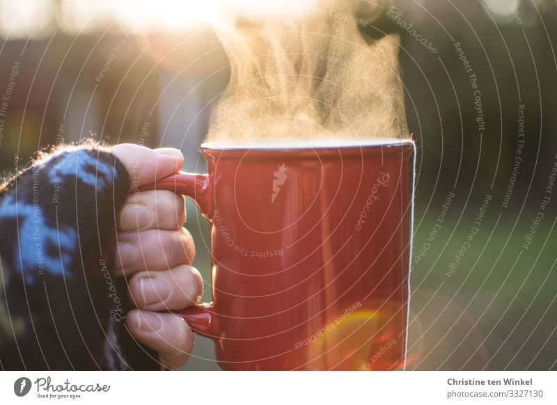 Hand holding red cup with steaming drink against the light Beverage Hot drink Tea Mulled wine Mug Woman Adults by hand Fingers 1 Human being 45 - 60 years