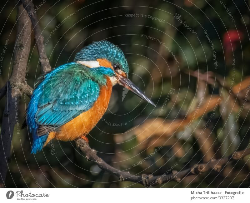 Lakefront Kingfisher Environment Nature Animal Sunlight Beautiful weather Tree Twigs and branches Lakeside River bank Wild animal Bird Animal face Wing Claw