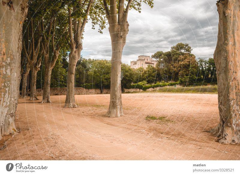 old villa Avenue avenue trees Villa Sand Clouds in the sky Lanes & trails Brown Green Gray Catalonia