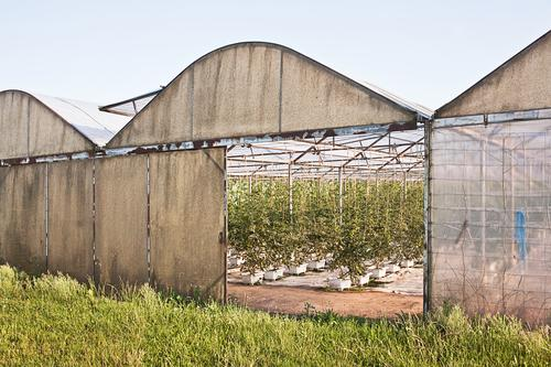 greenhouse Work and employment Profession Gardening Workplace Agriculture Forestry Sky Grass Building Greenhouse Colour photo Exterior shot Deserted Day