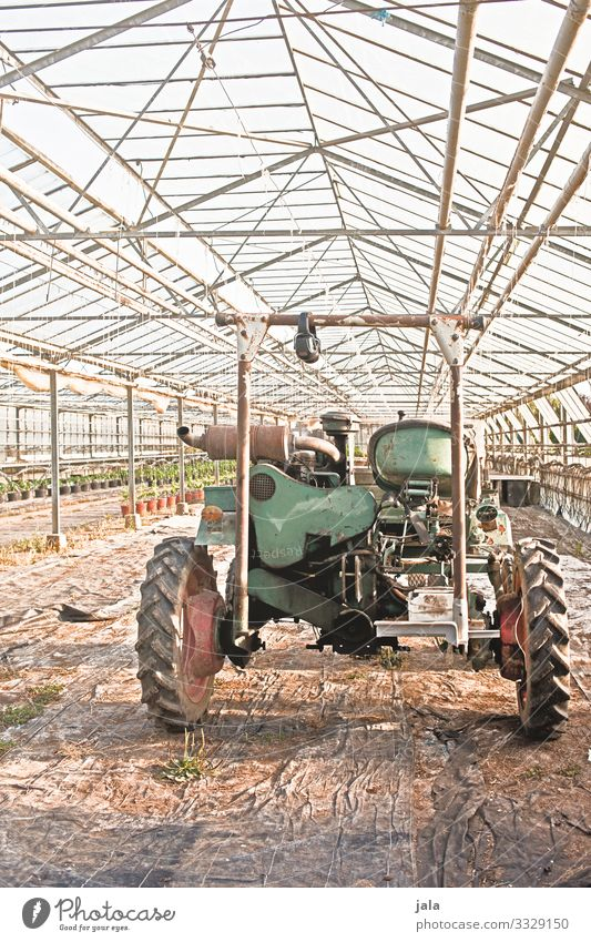 Vehicle Work and employment Gardening Agriculture Forestry Manmade structures Building Greenhouse Tractor Simple Colour photo Interior shot Deserted Day