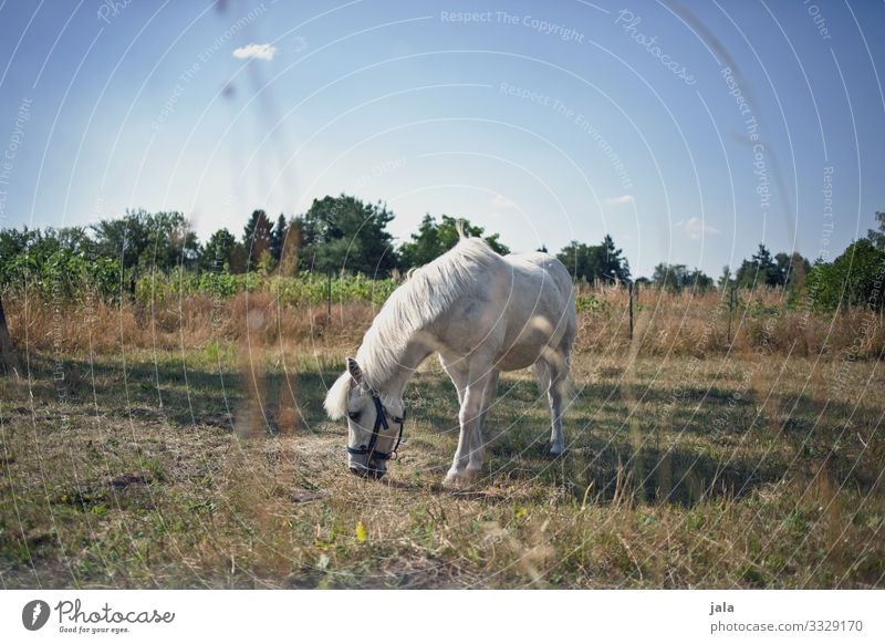 mold Nature Landscape Plant Sky Summer Beautiful weather Grass Bushes Wild plant Meadow Animal Farm animal Horse 1 To feed Love of animals Gray (horse)