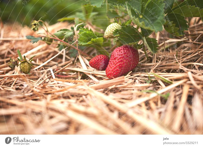 strawberries Food Fruit Strawberry Organic produce Agriculture Forestry Environment Nature Plant Summer Leaf Agricultural crop Fresh Healthy Delicious Natural